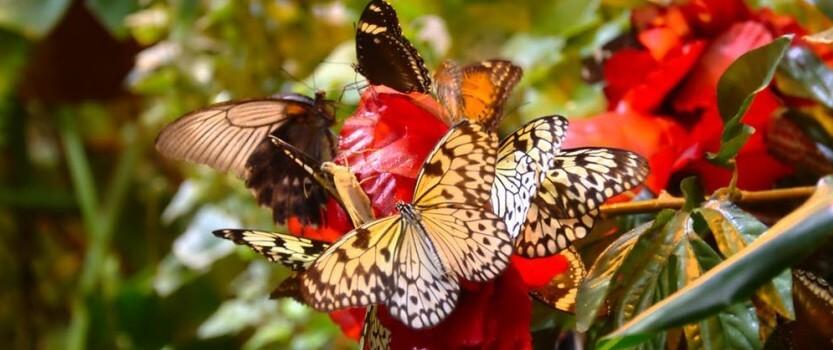 Сад бабочек Миндо