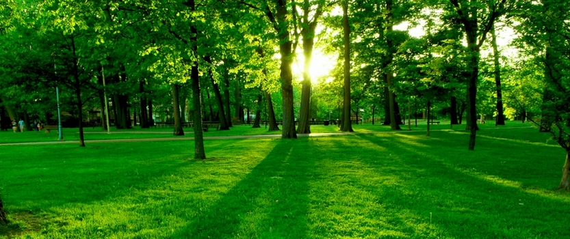 Выставка Зелёный мир Петербурга