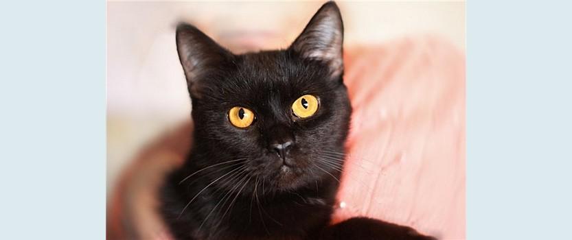 Международная выставка кошек Осенний бал