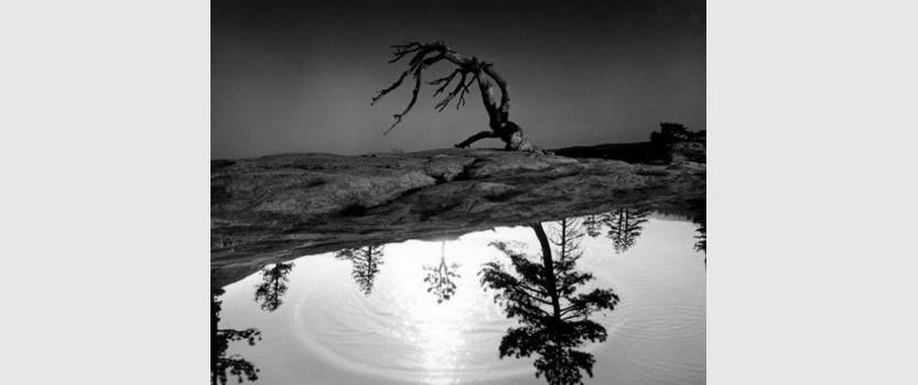 Выставка: Феноменальность отражения