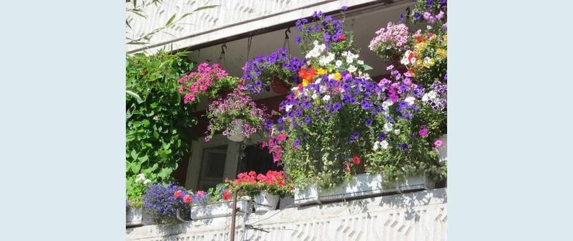 Экспозиция Балкония в Ботаническом саду