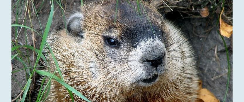 Groundhog Day in St. Petersburg