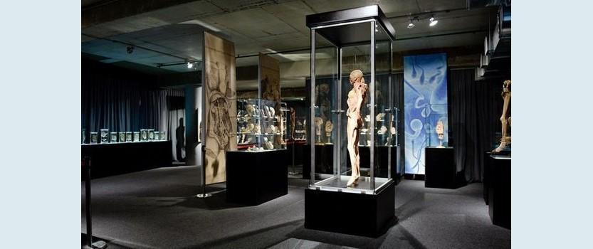 Выставка Тело человека