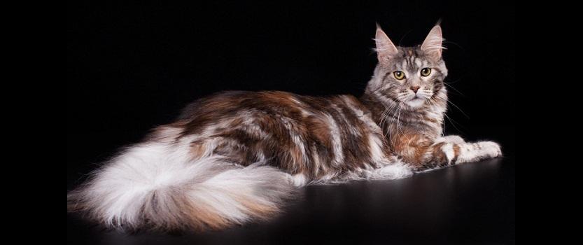Международная выставка кошек В гостях у Саффи