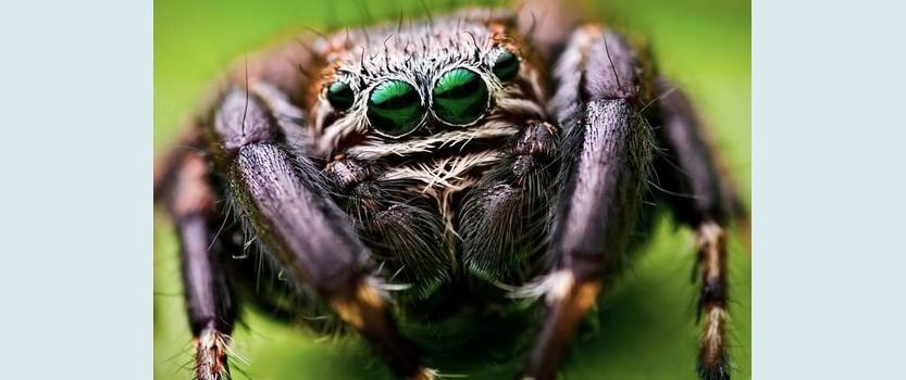 Выставка пауков в ТРЦ Монпансье