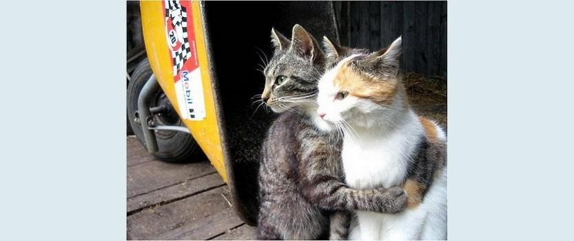 Всемирный день котов в Петербурге