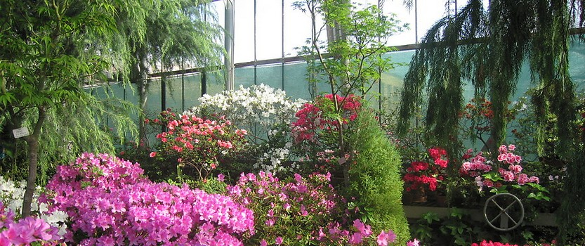 Walking through the greenhouses