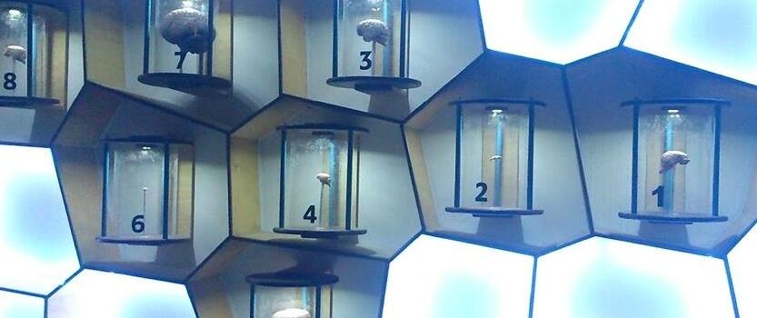 Познавательная интерактивная выставка «Биоэкспериментариум»