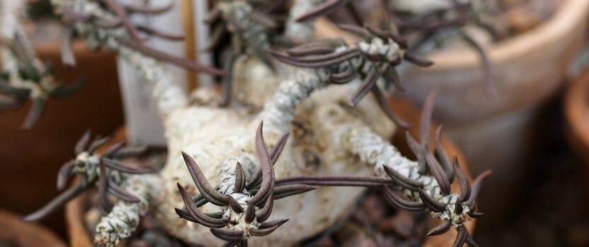 Выставка мадагаскарских уникальных растений