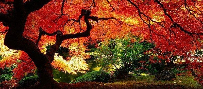 Фестиваль: Японская осень в Санкт-Петербурге