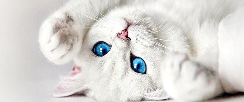 Белые коты. Белый вечер
