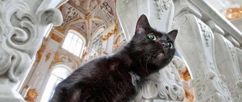 День эрмитажного кота — 2018