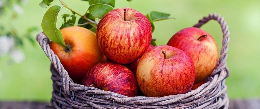 (RU) День яблок