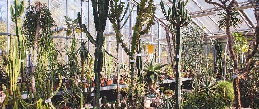 Патриотическая прогулка по Тропическому маршруту Ботанического сада «Приказано выжить!»