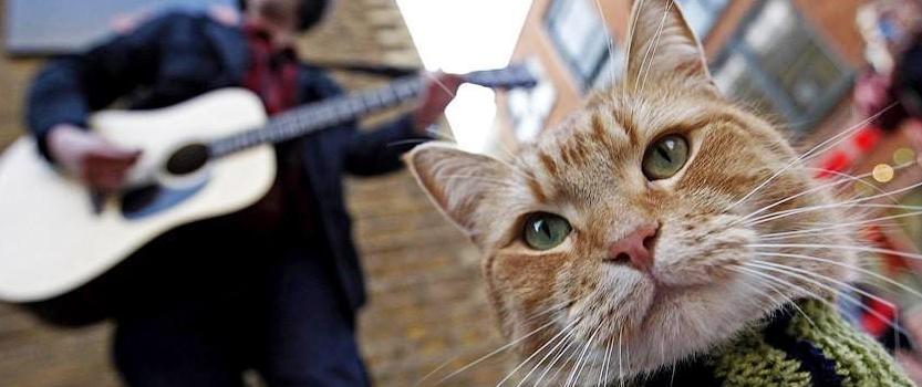 Спектакль про уличного кота Боба