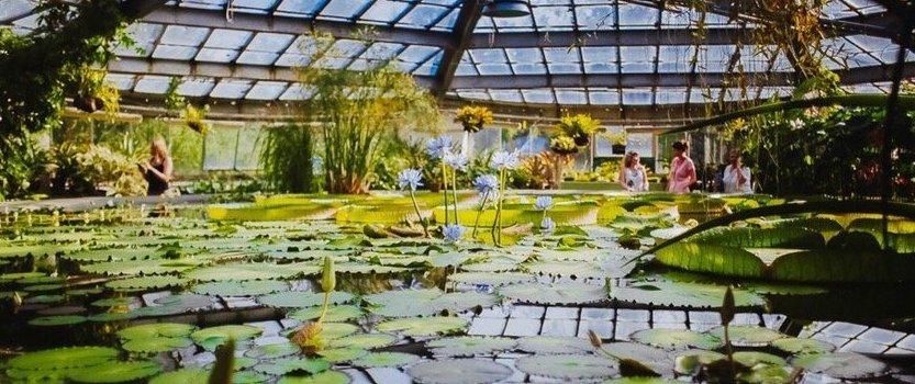 Водный маршрут в Ботаническом саду