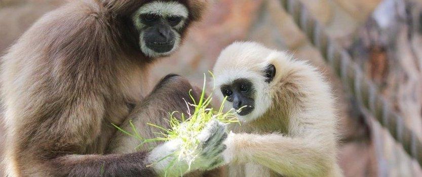 Познавательная программа Ленинградского зоопарка в День защиты детей